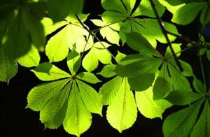 feuilles_gr