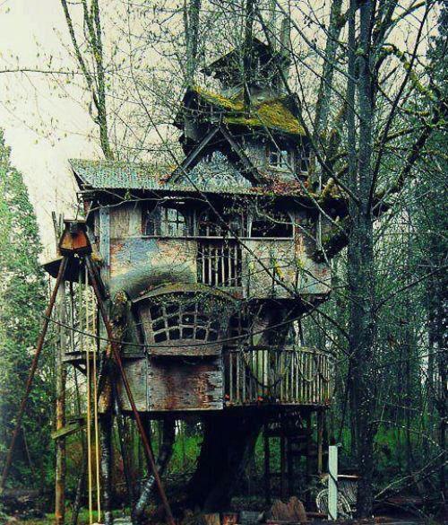 rêve cabane bois foret