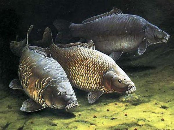 rêve de carpe poisson