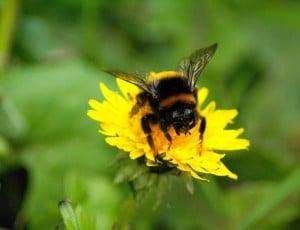 rêve bourdon abeille pollen fleur