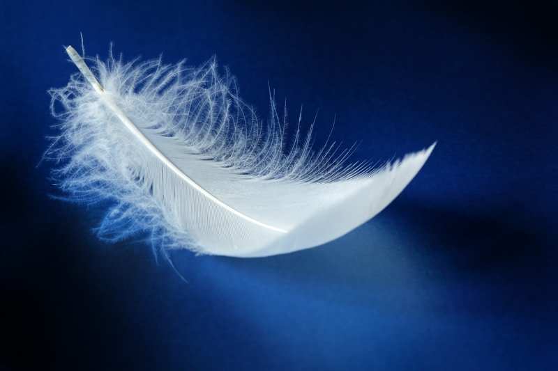 rêver de plume