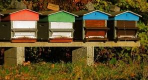 Rêver de ruche