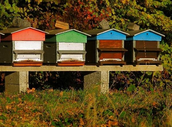 rêve ruche abeille