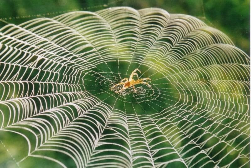 toile-araignée