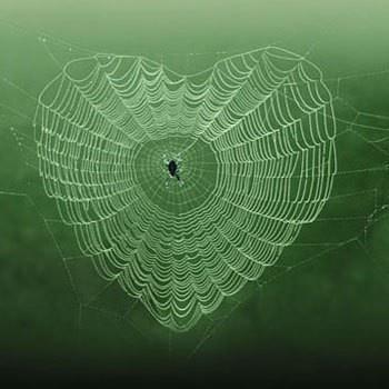 rêve toile d'araignée