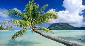 Rêver de palmier