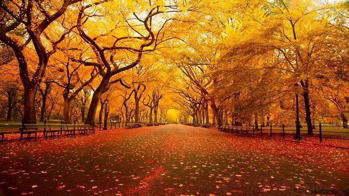 690x388xCentral-Park-New-York-Automne-blog-voyage-trace-ta-route.jpg.pagespeed.ic.Jb3ZeiJBwx
