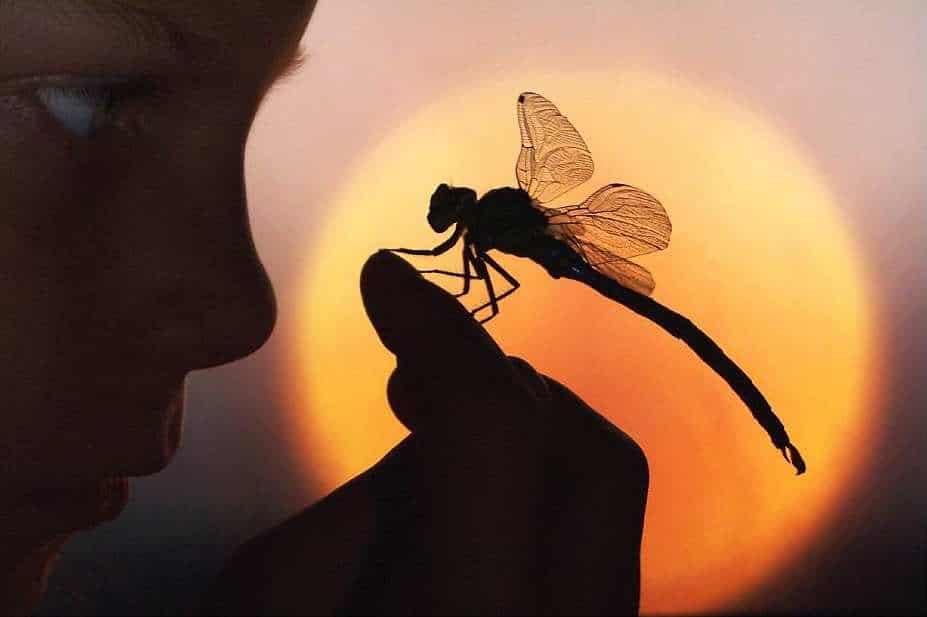 pouvoir de la libellule