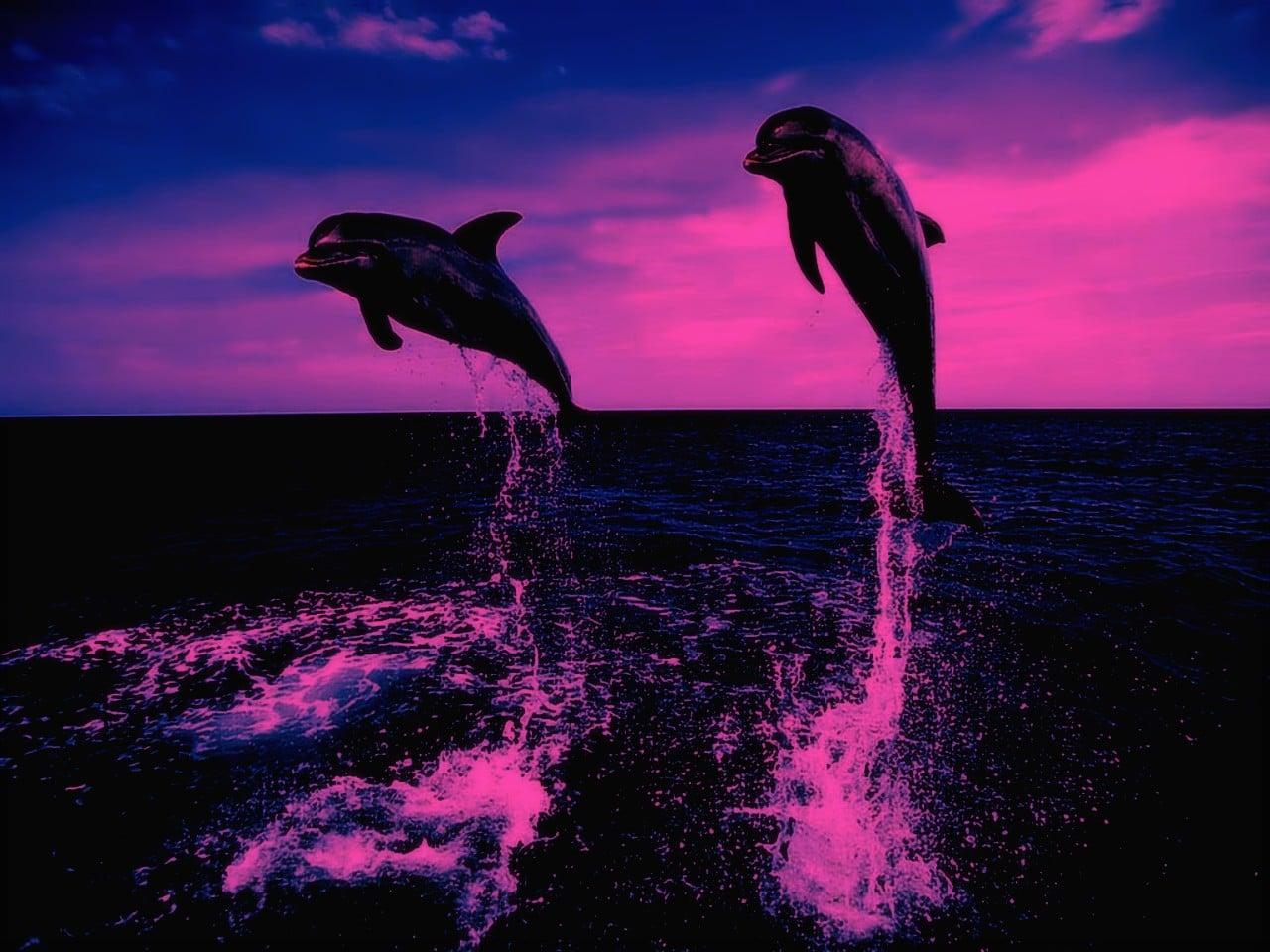 talisman dauphin