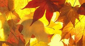 Rêver de feuilles