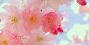 fleurs printemps feuilles