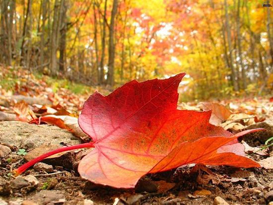IwRmhH_4658079feuille-d-automne-jpg
