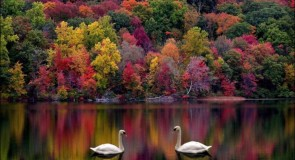 Rêver de l'automne