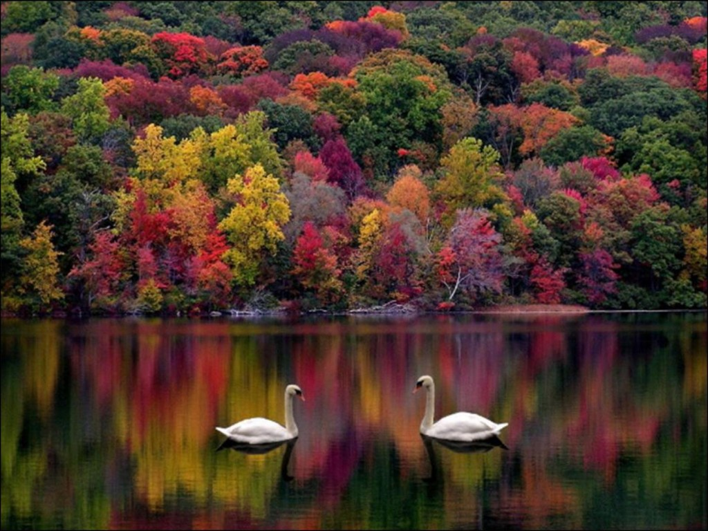 rêve automne