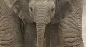Rêver d'un éléphant
