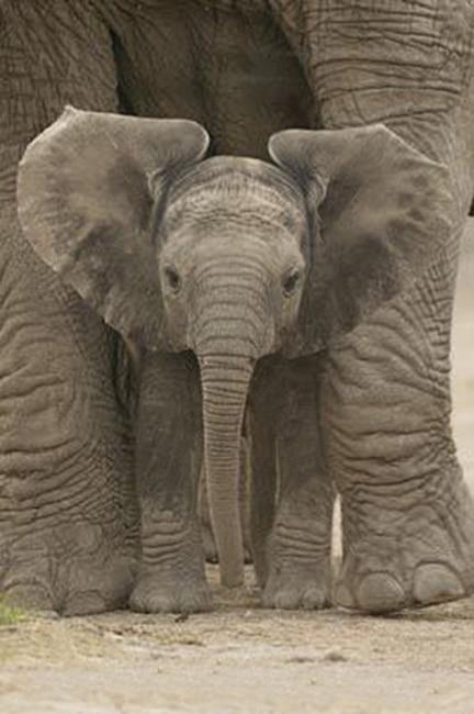 rêve éléphant