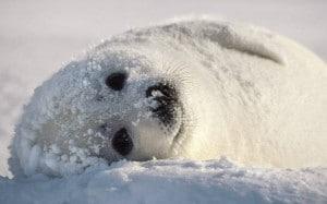 rêve avoir froid neige phoque