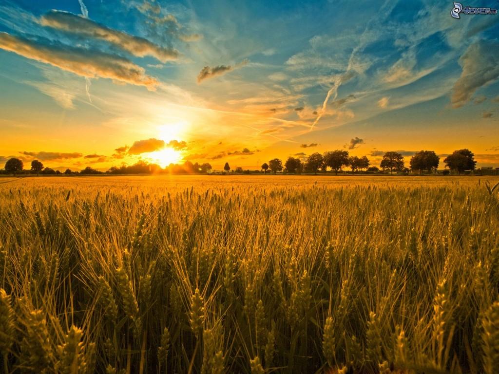 coucher-du-soleil-dans-le-champ,-nuages,-trainee-de-condensation-161359