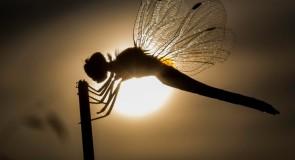 Rêver de libellule