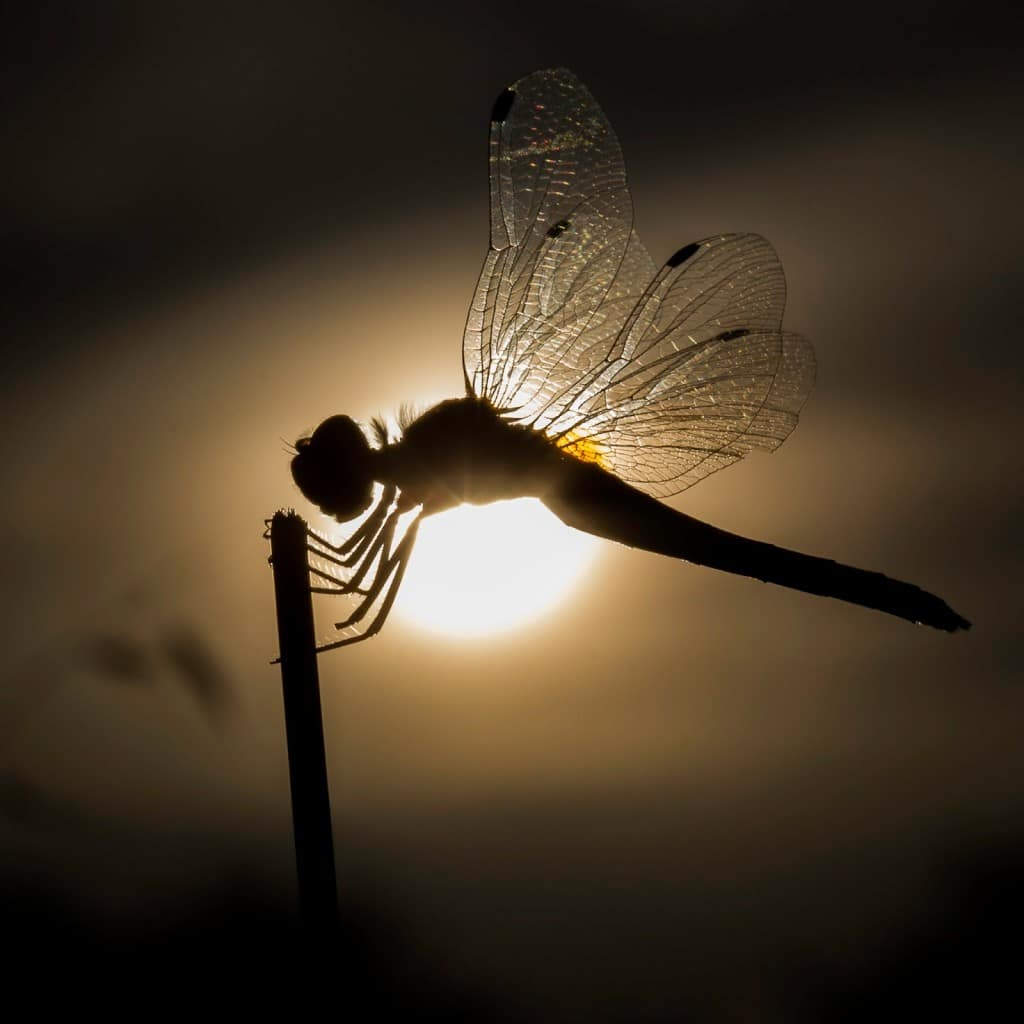 rêve libellule lumière