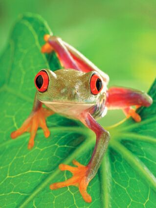 grenouille talisman