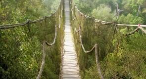 Rêver d'un pont