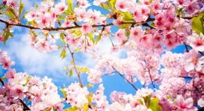 Rêver du printemps