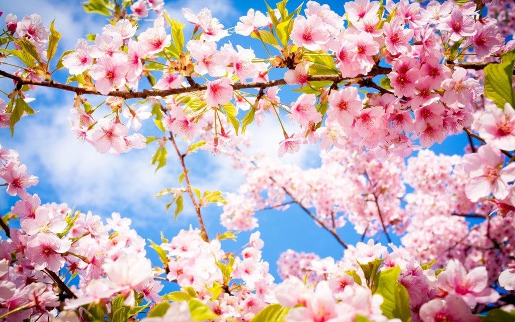 rêve printemps