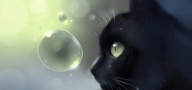 superstition sur les chats