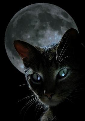 superstition chat noir échelle