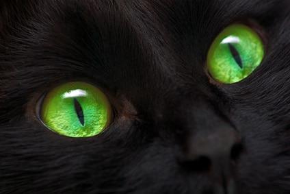 chat noir superstition