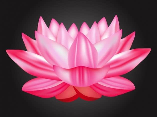 est-culture-exotique-lotus-vecteur_21-18766957