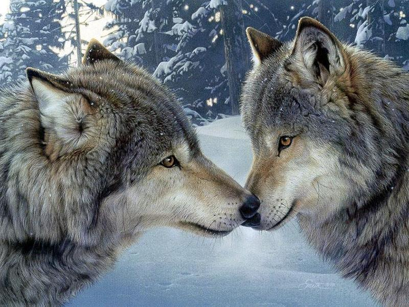 loups-3