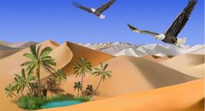 Rêver d'oasis