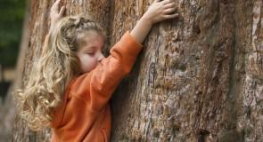 Toucher du bois
