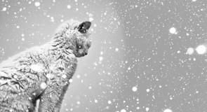 Rêver de neige