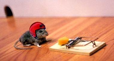 rêve piège à souris