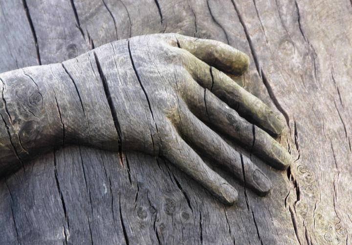 main touche du bois