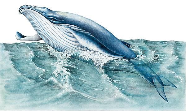 baleine poisson