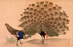 250px-Okyo_Peacock_and_Peahen