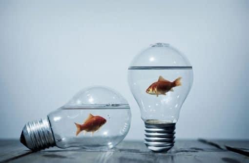 Interpr ter un poisson caf domancie divinatix for Bocal aquarium original