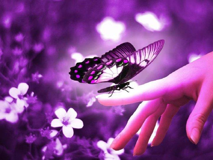rêve papillon