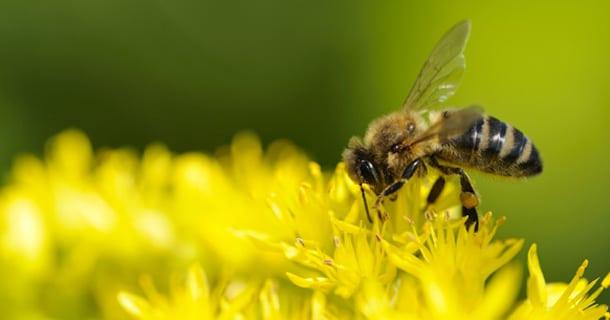 abeilles cafédomancie