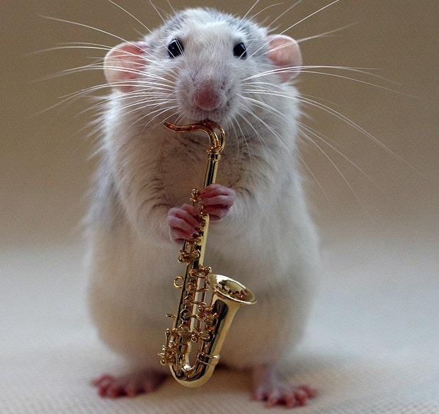 rêve avec des rats