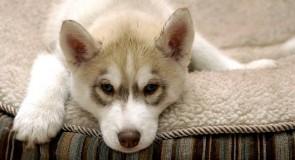 Rêver d'un chien