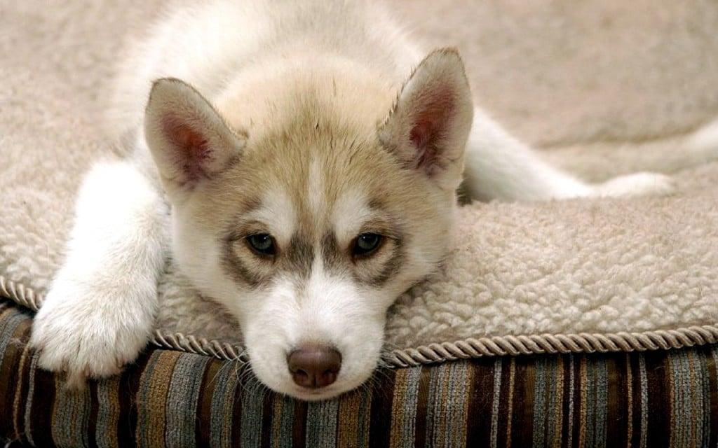 rêve chien