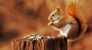 Interpréter un écureuil, cafédomancie