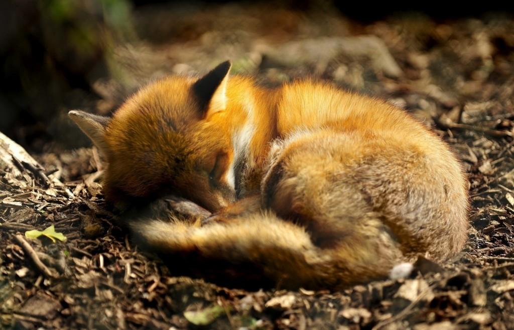 fox-9857-2560x1600