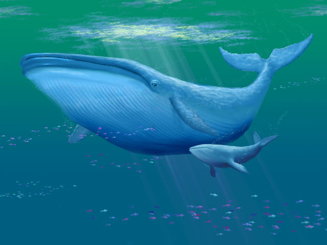 baleine cafédomancie