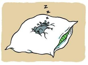 superstition sur les lits